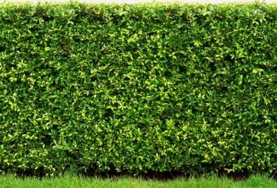 Aplicación de pared de jardín